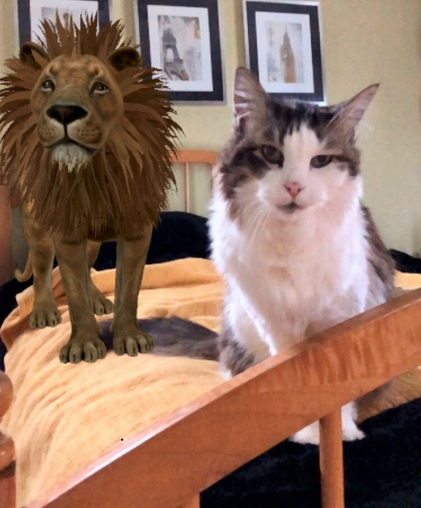 Google AR Lily and Lion